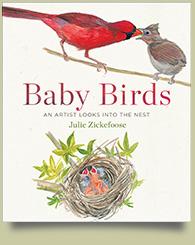 babybirds-plain